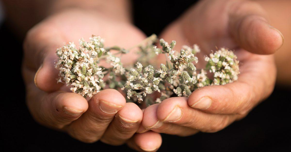Zaatar Flowers